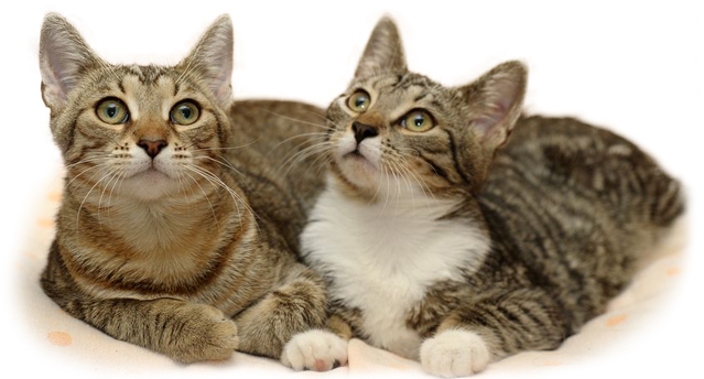 Если кошка долго просит кота