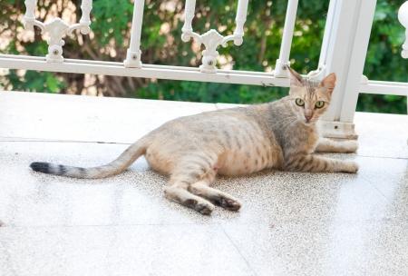 Замершая беременность симптомы у кошки