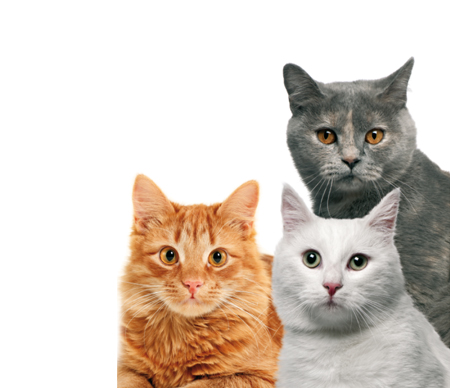 Эффективность и действие Гестренол капли для котов