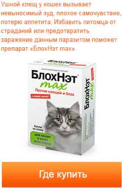 Ушной клещ у кошек что делать если