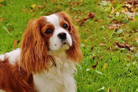 Блошиный дерматит у собак — лечение в домашних условиях, симптомы, профилактика | НВП «Астрафарм»