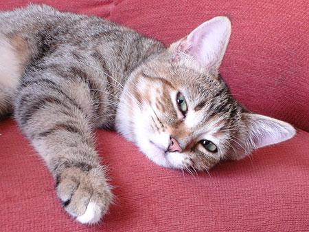 болезни кастрированных котов симптомы