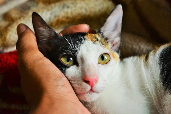 Аллергия на укусы блох у кошек: лечение и профилактика | НВП «Астрафарм»