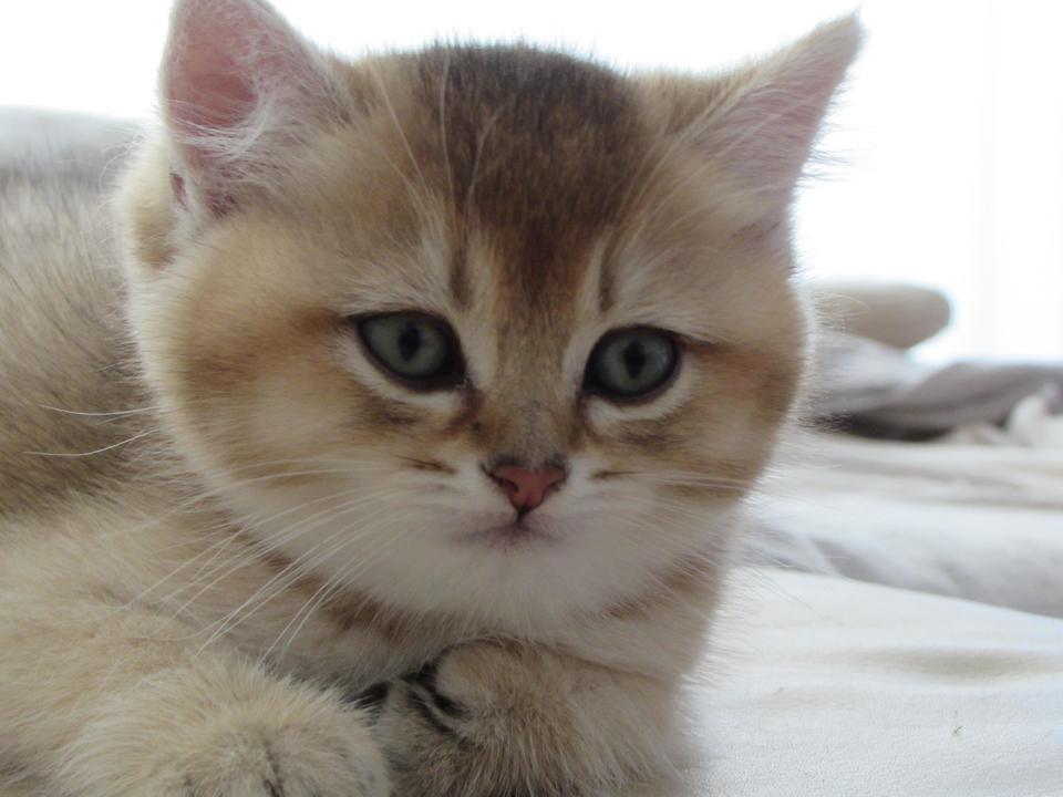 Чем вылечить глисты у котенка