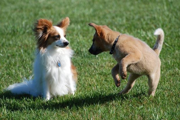 worms puppy 1 - Как узнать есть ли глисты у щенка 2 месяца