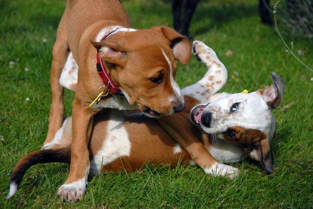 worms puppy 2 - Как узнать есть ли глисты у щенка 2 месяца